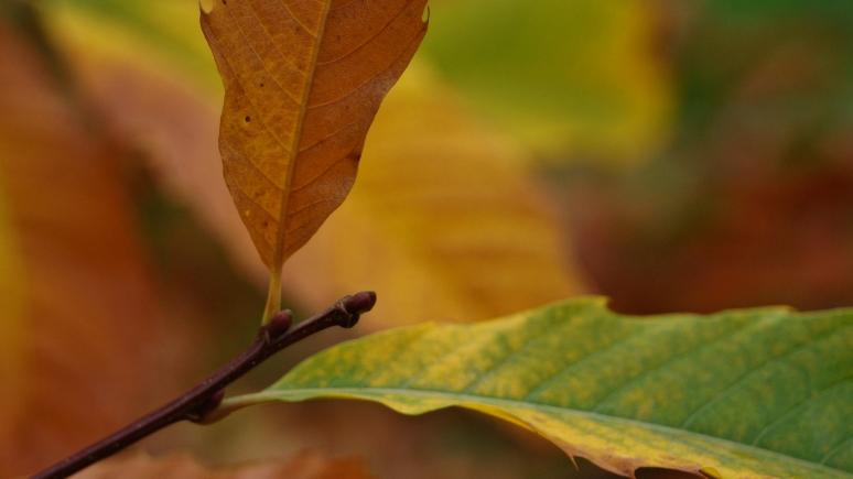 DSC00013(automne)