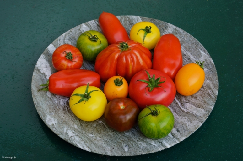 DSC07912 (tomates 2)