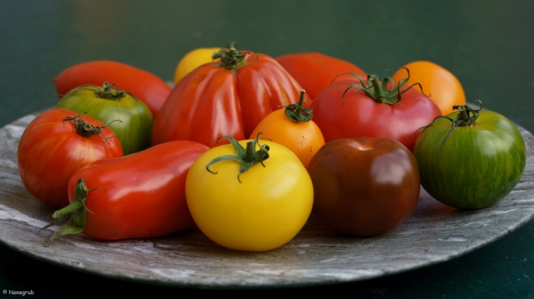 DSC07916 (tomates)