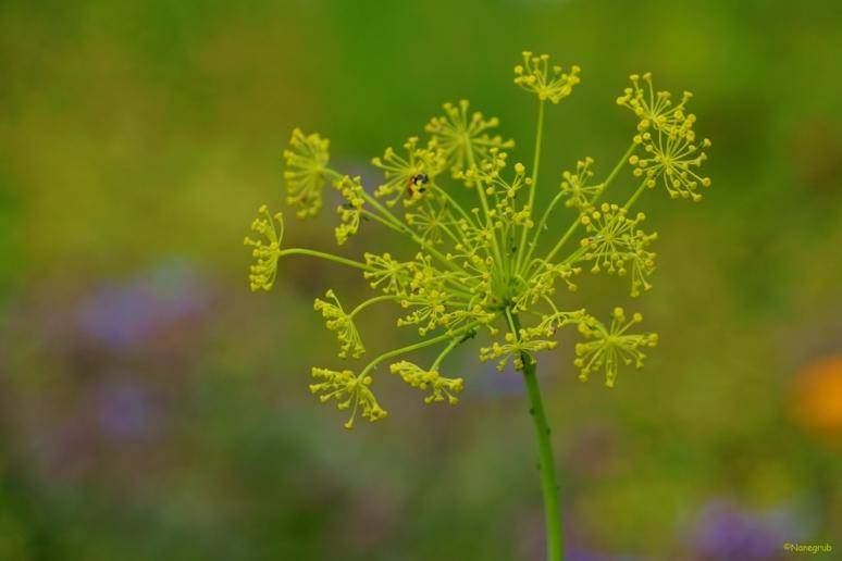 DSC08642 fleur