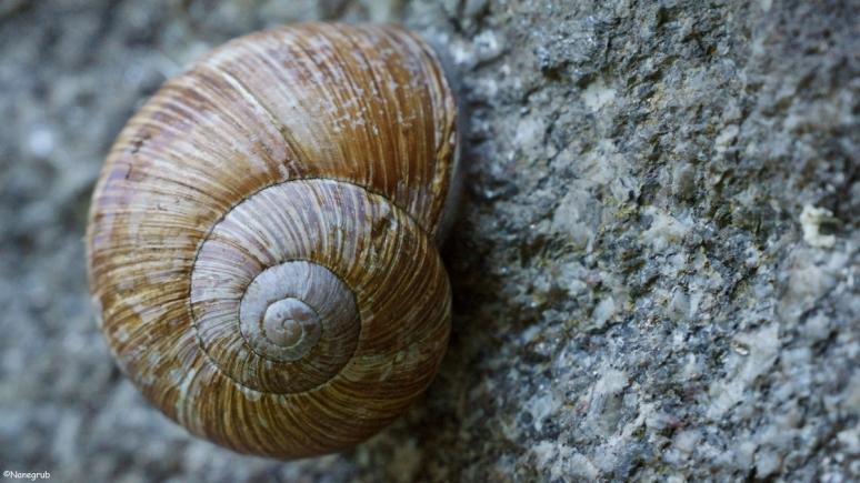 DSC08734(escargot)